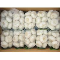 China 2017 china food garlic new crop hot sales fresh garlic normal white garlic wholesale