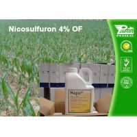China White Crystalline Or Powder Post Emergence Select Herbicide Nicosulfuron 4% OF wholesale