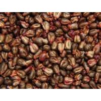 China GRAPE SEEDS wholesale