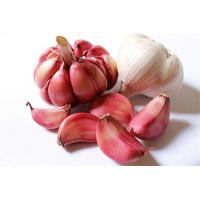 China Red Fresh Garlic Red with Cheap Price wholesale