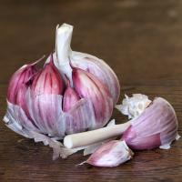 Quality Chinese The Hot Fresh New Crop Garlic 5.5cm+ for sale