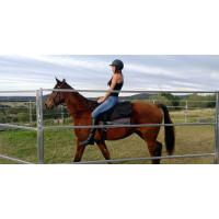 China New style 1.8x 2.1m High quality cheap livestock horse round yards for sale wholesale