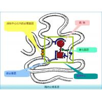 China Recombinant human Chymotrypsin Enzyme for Enzymatic Hydrolysis of Protein wholesale