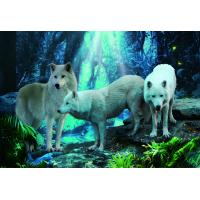 China Pet / Pvc / PP Wolf Animal Photos Lenticular 3d Posters For Store Eco - Friendly wholesale