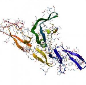 China Endoproteinase Glu-C V8 , Extracellular Bacterial Serine Protease Of The Glutamyl Endopeptidase I Family wholesale