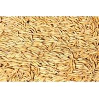 China Oat Seeds for animal feed wholesale