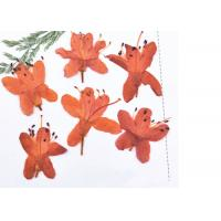 Buy cheap 3D Art Painting Dried Pressed Flowers / Framed Dried Flowers Teaching Specimens from wholesalers