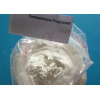 China Supply Free Sample Testosterone Propionate Powder 57-85-2 , Muscle Gaining  Steroid wholesale