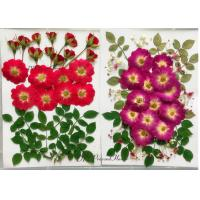 China Raw Material Dried Pressed Flowers Eternal Plant For Cell Phone Case Decoration wholesale