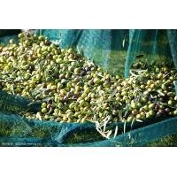 China 100% virgin HDPE green70-150 gsm  falling olive harvest netting wholesale