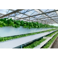 China Tomato Plant  Hydroponic Good Weather Resistance Agricultural Greenhouse on sale