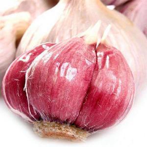 China New Season Top Quality Red Garlic wholesale
