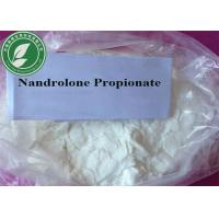 China Muscle Growth Steroids Powder Nandrolone Propionate for Bodybuilding wholesale