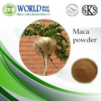 China GMP maca extract powder/herbal medicine for sex improvement maca extract powder/ hot sell 4:1 maca extract powder bulk wholesale