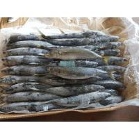 Buy cheap Factory selling frozen muroaji layang scad whole round scad from wholesalers