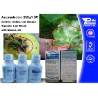 China Azoxystribin 250% SC Systemic Fungicides Control Pathogens 131860-33-8 wholesale