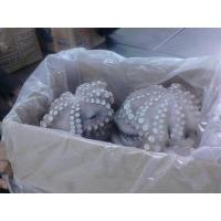 China High quality fresh good IQF frozen octopus/fresh octopus flower wholesale