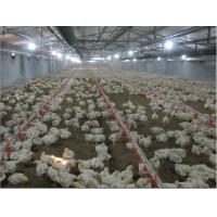 Suspension Lifting System for Poultry Farm Equipment