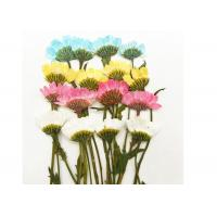 Buy cheap Chrysanthemum / Daisy Dried Colorful Flowers Handmade Crafts For Festive / Party Decoration from wholesalers