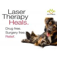 Quality Veterinary Laser therapy for treating post surgical pain and many acute and for sale