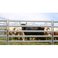 China metal cattle panels Cattle Yard Fence Heavy Duty 6 Oval 1.6mm thick 1.8Mx2.1M wholesale