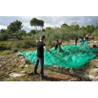 Quality HDPE high quality green olive net for harvest for sale