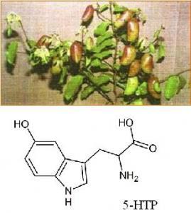 Latest sleep apnea narcolepsy buy sleep apnea narcolepsy for 5 htp plante
