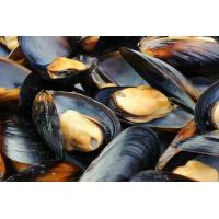 China Frozen HACCP Certification Cooked Mussels Tasty Seafood From China wholesale