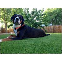 China Water Permeable Artificial Grass For Dogs Synthetic Sand / Rubber Infill Multicolor on sale