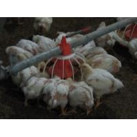 Broiler Automatic Feeding Pan for Poultry Farm Equipment