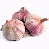 China Wholesale New Product Chinese Vegetables Purple Garlic wholesale