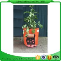 China Outdoor Garden Plant Accessories , Classic Line Tequila Sunrise Fabric Planter garden bags wholesale