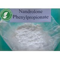 China Muscle Growth Steroid Powder Nandrolone Phenylpropionate CAS 62-90-8 wholesale