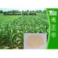 China Rimsulfuron 25% WDG Selective Weed Killer For Lawns / Selective Herbicide For Maize wholesale