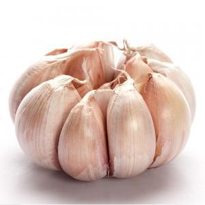 China New Crop Normal White Garlic wholesale