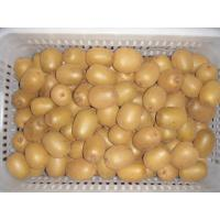 Jin Yan golden kiwi seedlings golden kiwi plant yellow kiwi seedlings 2y young grafted seedlings