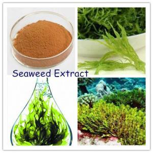 Seaweed Extract,Seaweed Extract Powder, brown seaweed extract fucoidan