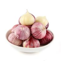 China High Quality Dried Garlic Powder Low Garlic Price Dehydrated Garlic Manufacturer wholesale