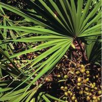 Buy cheap Saw Palmetto extract---New Mstar---Simin from wholesalers