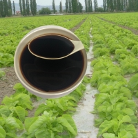 China Soybean Source Hydrolysate Protein Amino Acid Liquid 30% Agricultural Fertilizer wholesale
