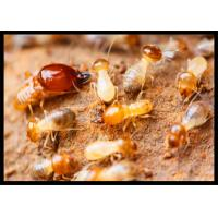 High Effect Professional Termite Treatment CAS 120068-37-3 Fipronil 0.5% DP