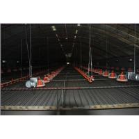 Buy cheap Suspension Lifting System for Poultry Farm Equipment from wholesalers