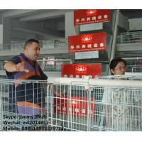 China Huaxing Brand 120birds Chicken Layer Cages Factory Price Poultry Battery Cage For Sale Zambia Ghana Farm wholesale