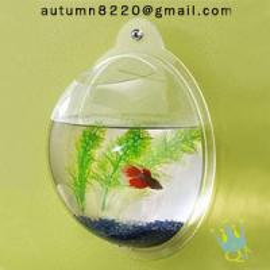China acrylic wall mount fish bowl wholesale