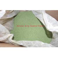 Quality Yellow Green Pure Natural Organic Seaweed Powder Food Supplement CAS NO.3351-86 for sale