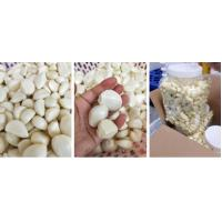 Quality New Crop Frozen Fresh Peeled Garlic for sale