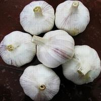 China Cheap chinese normal white garlic for wholesales wholesale