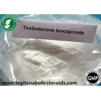 China White Steroid Powder Testosterone Isocaproate For Gain Mass CAS 15262-86-9 wholesale