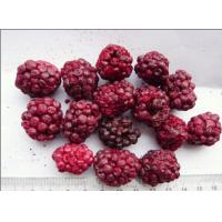 China Raw Fruit Flavour Freeze Dried Blueberries Microelements Contained Low Calorie wholesale