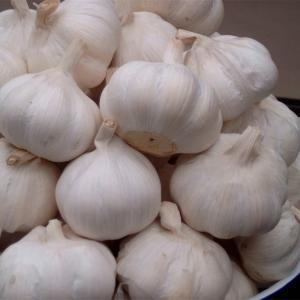 China Wholesale Chinese Normal White Garlic wholesale
